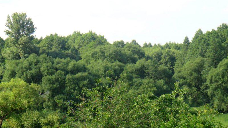 Шацк, буйная зелень в пойме реки Шать