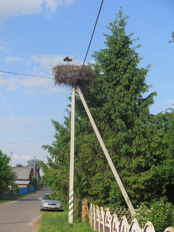 Гнездо аиста на столбе, Шацк, улица Михалевичи