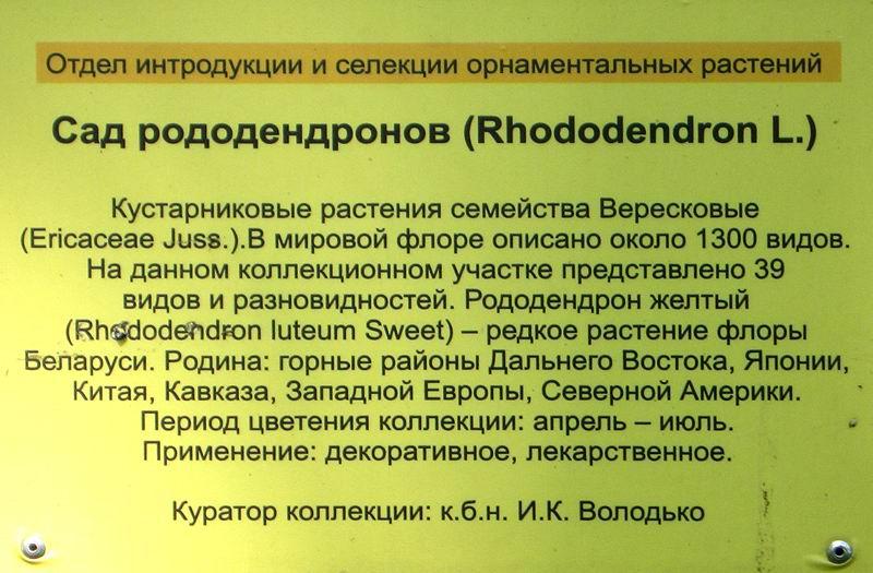 0038 Rhododendron_tabl