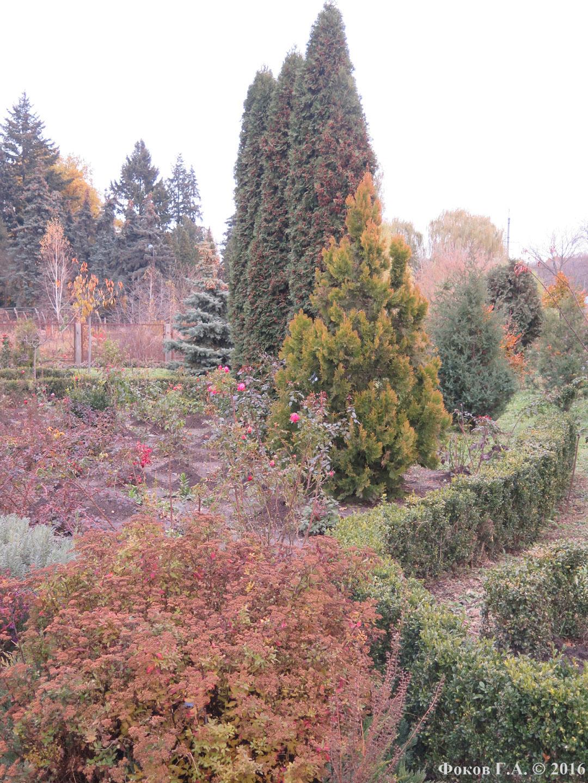 Пейзаж Сырецкого дендропарка