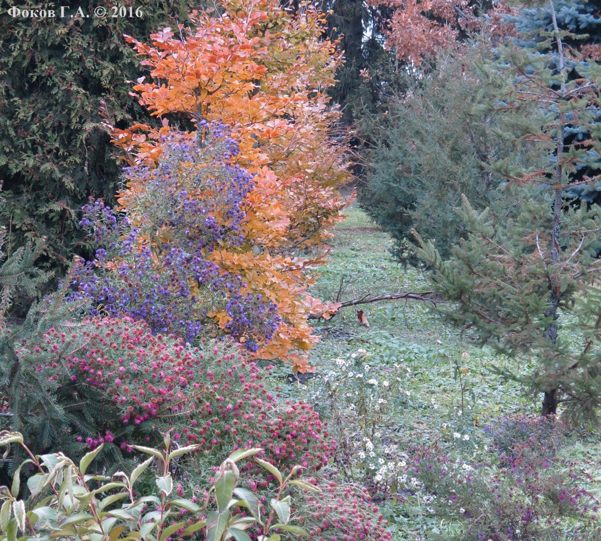 Осень в Сырецком дендропарке