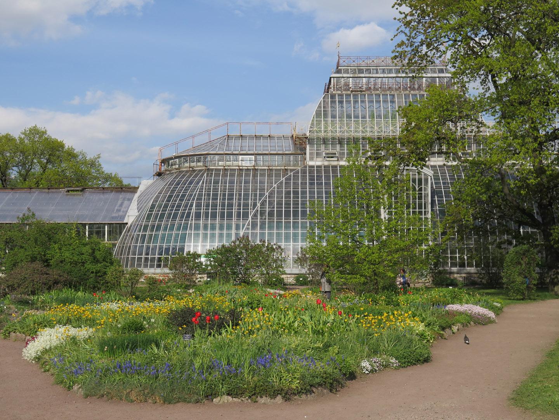 Петербург, Ботанический сад Петра Великого. Оранжерея.