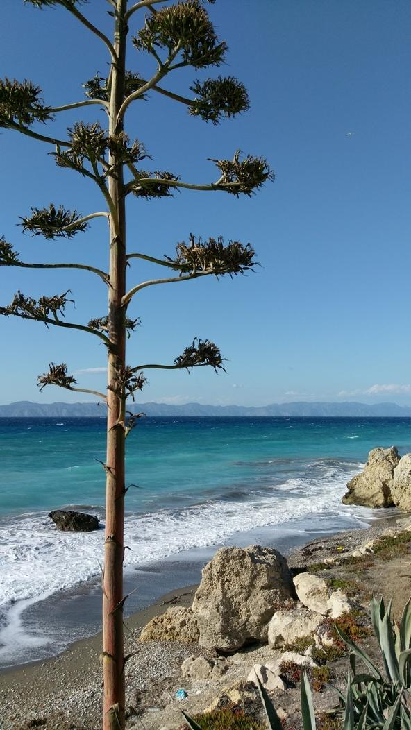Остров Родос, сосна на берегу, Греция